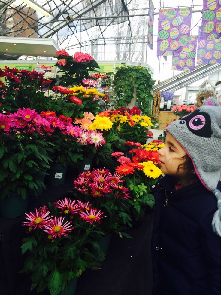 Checking out some colourful flowers at Plant World in #Etobicoke. @iloveplantworld