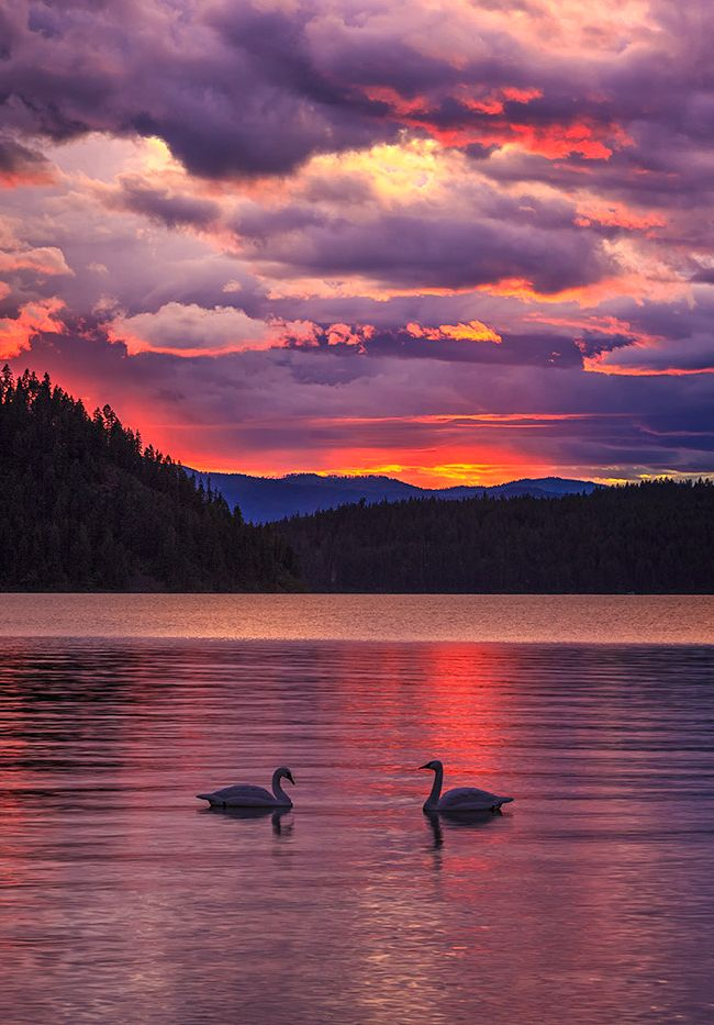 Holy Moley | Priest Lake. Coolin, Idaho USA | Dave Arnold