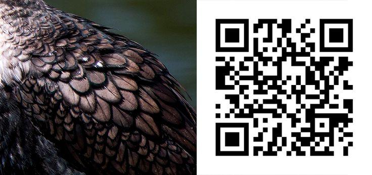 Guess the Bird 38 http://birdwatcher.co.za/guess-the-bird-38/