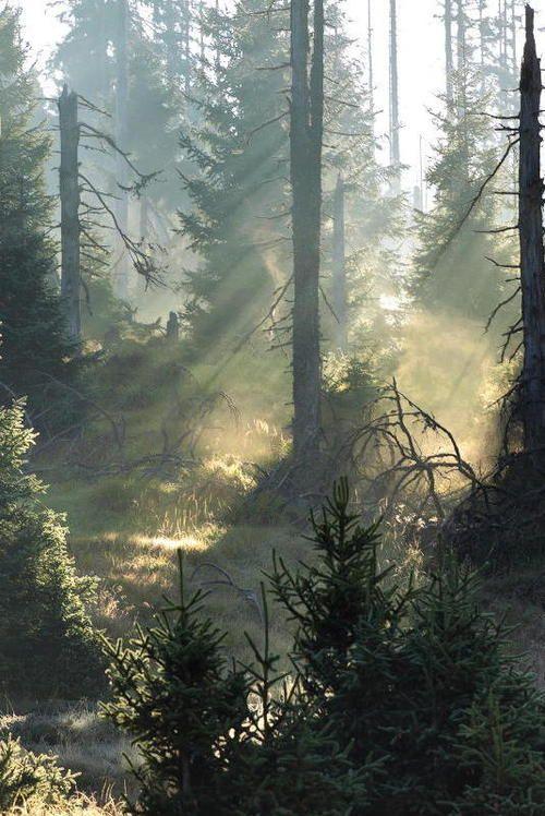 Forest Light   Kilian Schönberger