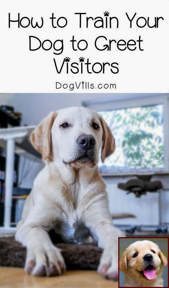 House Training A Puppy In Nyc And Dog Behavior Forums