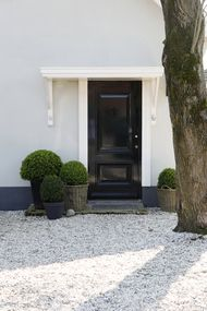 Shaped boxwood in grouping by the door