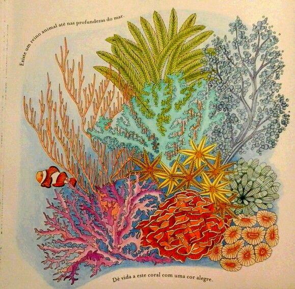 Reino Animal ColouringColoring BooksAdult