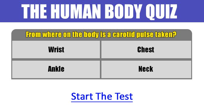 Paragraph about human body facts