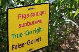 trivia at the corn maze - bonnybrook farm in Cincinnati >>> This looks fun. Has anyone done this?