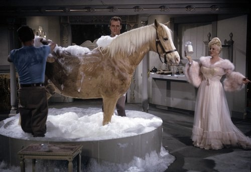 Mae West on Mister Ed | TV and Movie Horses | Pinterest ...