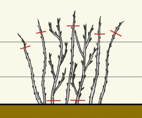 Почему важно обрезать малину осенью? | 6 соток