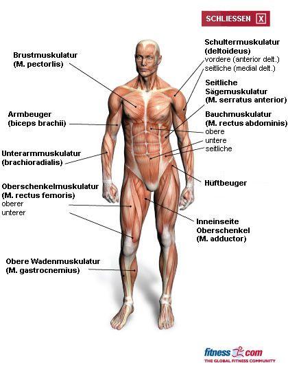 fitness.com - Sport- und Fitnessübungen, Forum, Fitnesstudio-Suche und Artikel