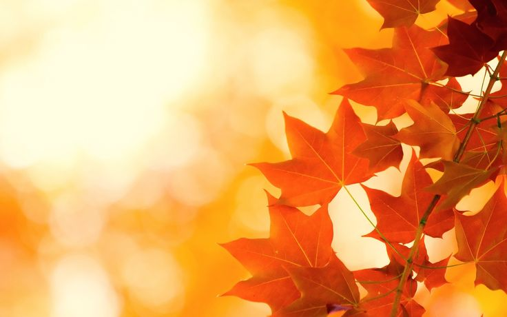Wallpapers Autumn Leaves Wallpaper