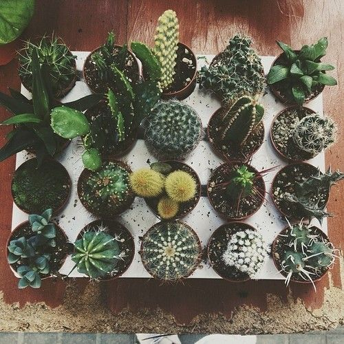 i would have a whole collection of cacti and succulents and other such plants