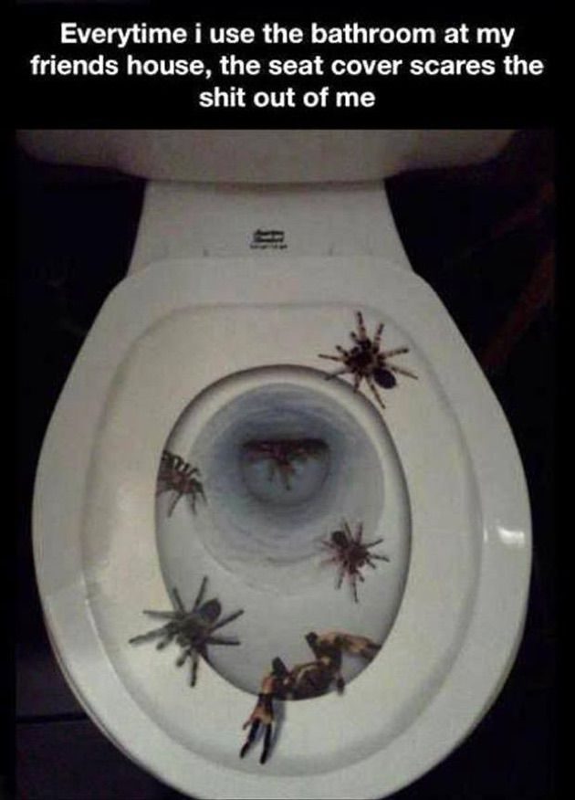 large toilet seat covers. Extraordinary Large Toilet Seat Covers Pictures  Best inspiration