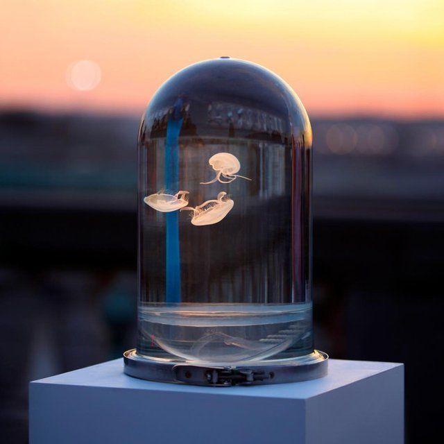Fancy - The Darwin Jellyfish Tank