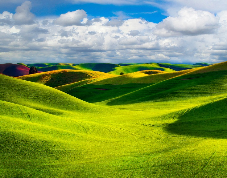 Storm Clouds in the Palouse; photograph by Kevin McNeal. Outside Pullman in eastern Washington: Favorite Places, Beautiful Moscow, Green Fields, Palous Washington, Beautiful Places, Beautiful Palous, Natural Landscape, Fields Palous, Storms Cloud