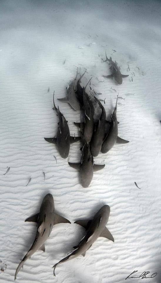 Sharks on the ocean floor.