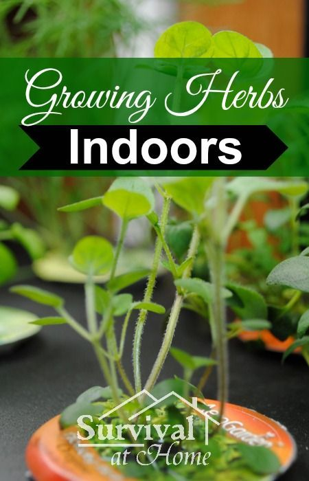 "Growing Herbs Indoors >> Herb gardening is a great hobby to have even if you're not into the whole ""tilling up the land"" kind of gardening. Growing herbs indoors is simple and fun!:"