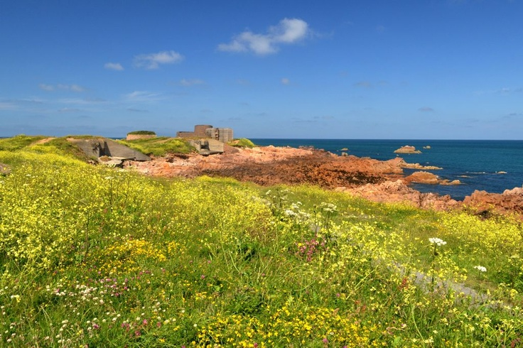 Field of gold at Fort Hommet #LoveGuernsey (Submitted by @GuernseyLiz14 via Twitter)