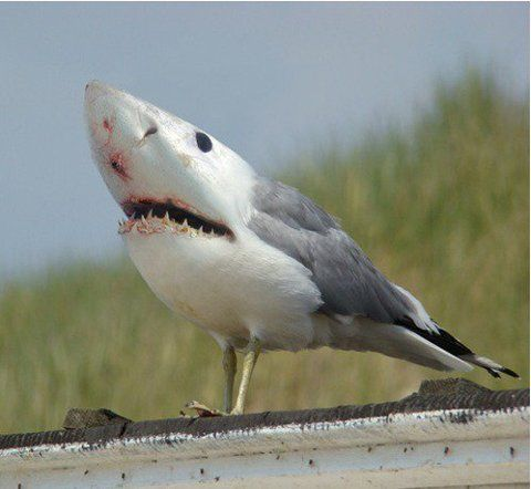 great white sea gull. hate these.