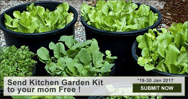 Nurserylive is sending away 500 kitchen gardens to moms all over India for Free !  Participate Now.