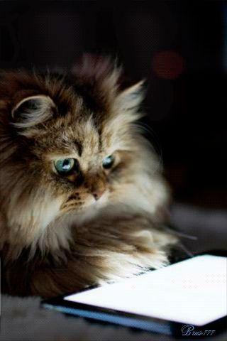 Учёный кот, Фото животных