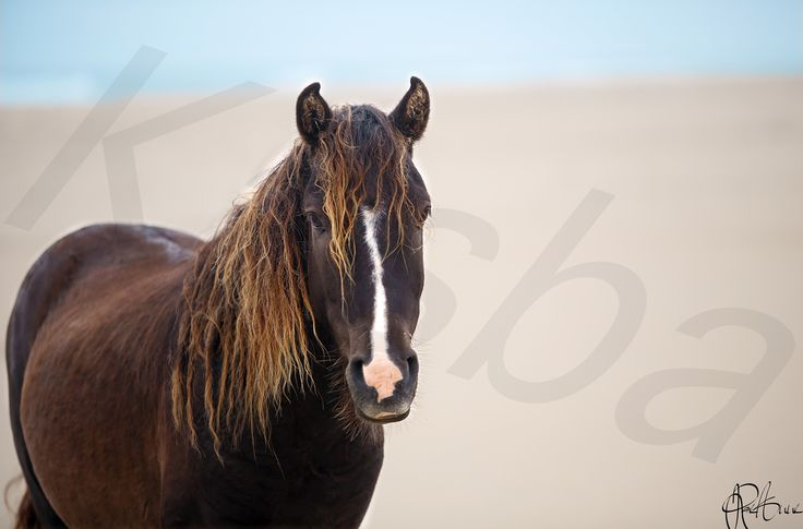 Photography by Kasba Media/Rae-Anne Laplante of Sable Island, Nova Scotia