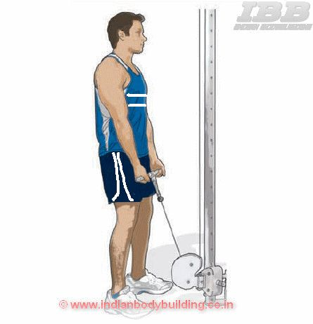 Biceps Low Pulley Curls - Exercise  Movement