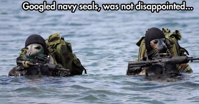 Navy seals, A Pun Here A Pun There, Bad and Good Puns Everywhere!