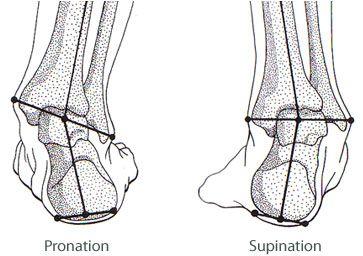 pronation-supination-1.jpg (363×256)