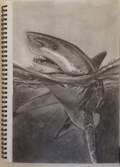 realistic shark drawing in pencil - Pesquisa Google