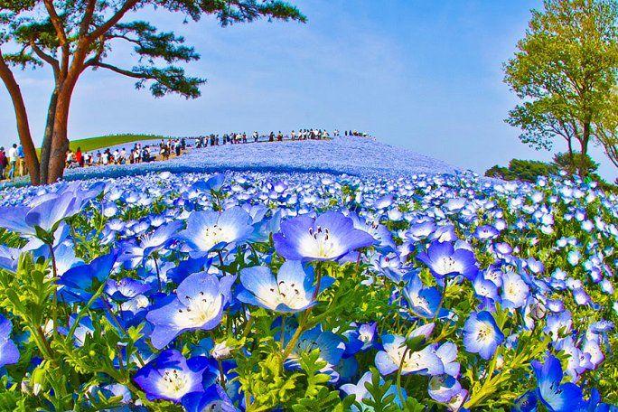 il favoloso parco hitachi in giappone