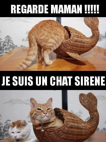 Regarde maman ! Je suis un chat sirène !