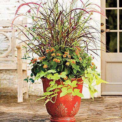 Grasses and lantanas