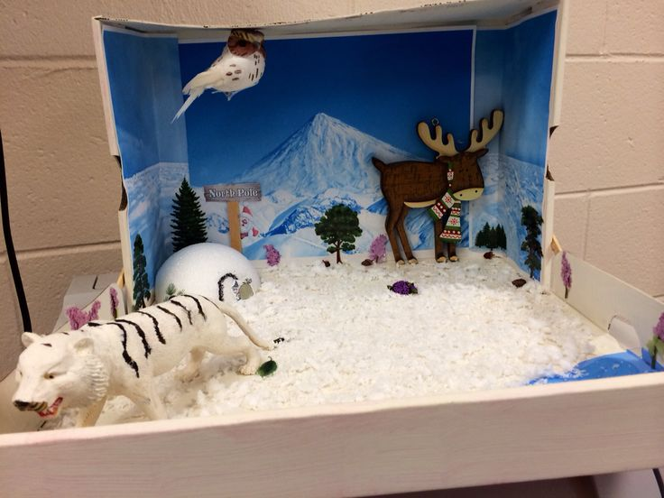 Tundra biome diorama science project angelina 39 s for 3d cuisine boe