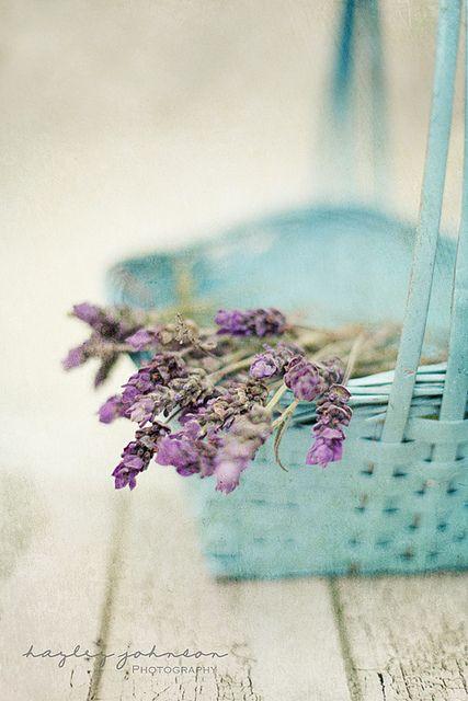 lavender and aqua