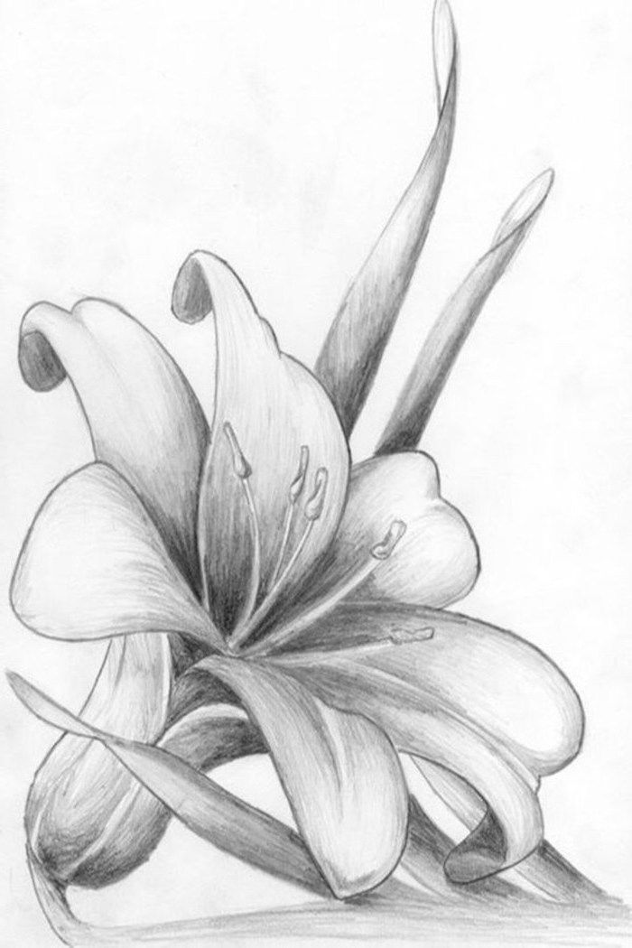 White Background How To Draw A Flower Easy Black And White Pencil