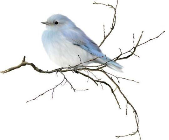 93 mejores imágenes de Birds en Pinterest   Pájaros bonitos, Fotos ...