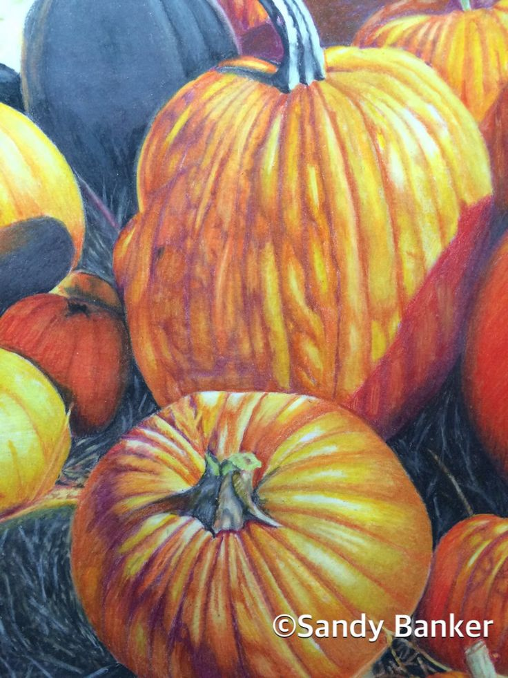 pumpkin drawing color. mcdonald!s pumpkin patch. prismacolor on bristol. 8x10. own reference photo. drawing color m