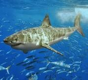Sharktoberfest San Francisco, CA #Kids #Events
