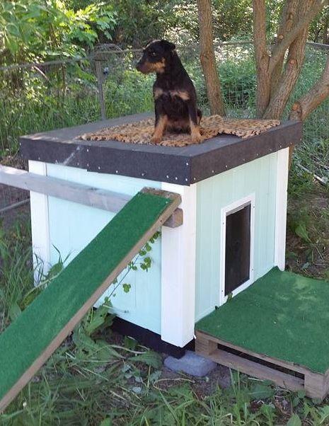 Dog Kennel / Hundkoja Hundkoja Kung … Kungsvägen Rosersberg