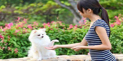 Cara melatih anjing agar bersalaman http://www.anjinglovers.com/cara-melatih-anjing-bersalaman/ #anjing #anjinglovers #anjinglover #dog #doglover #animal #pet #melatihanjing #pelatihananjing #caramelatihanjing #caramelatihanjingbersalaman