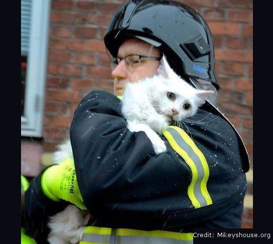 Tűzből kimentett cicák és bátor megmentőik | Lótusz