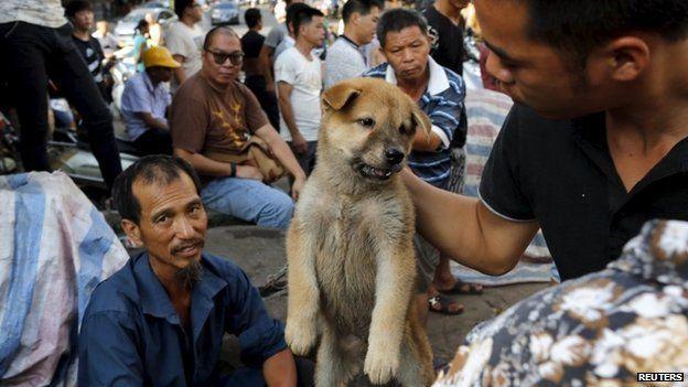 BBC News: China Yulin dog meat festival under way despite outrage