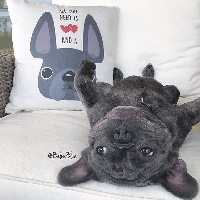 1000 images about french bulldogs on pinterest french bulldog art puppys and bullies. Black Bedroom Furniture Sets. Home Design Ideas