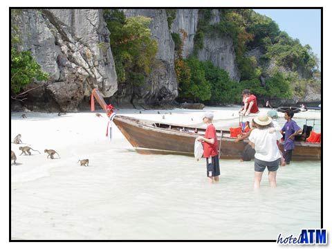 Monkeys on Monkey Beach Phi Phi Island