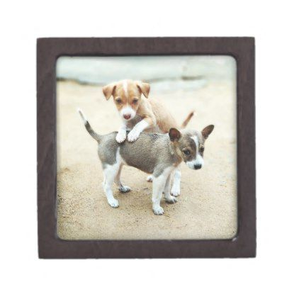 Adorable Puppies Playing on Beach Keepsake Box - photographer gifts business diy cyo personalize unique