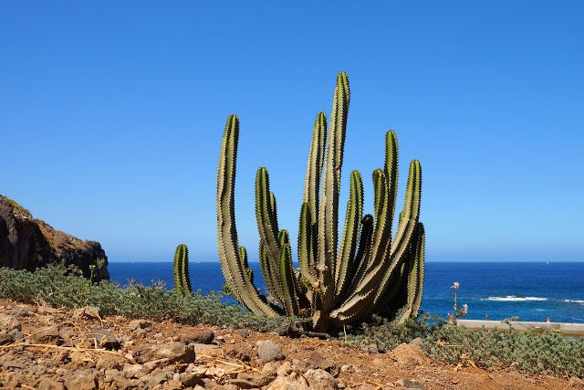 Weather Forecast for Tenerife from 16 to 22 May
