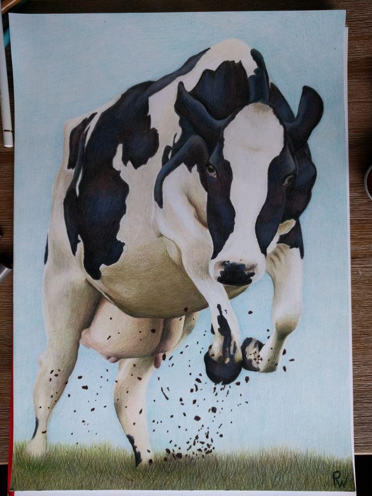 Tekening koe, voor een wedstrijd, 1e prijs.