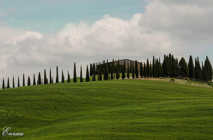 Verdi colline toscane- Green tuscan hills    #TuscanyAgriturismoGiratola
