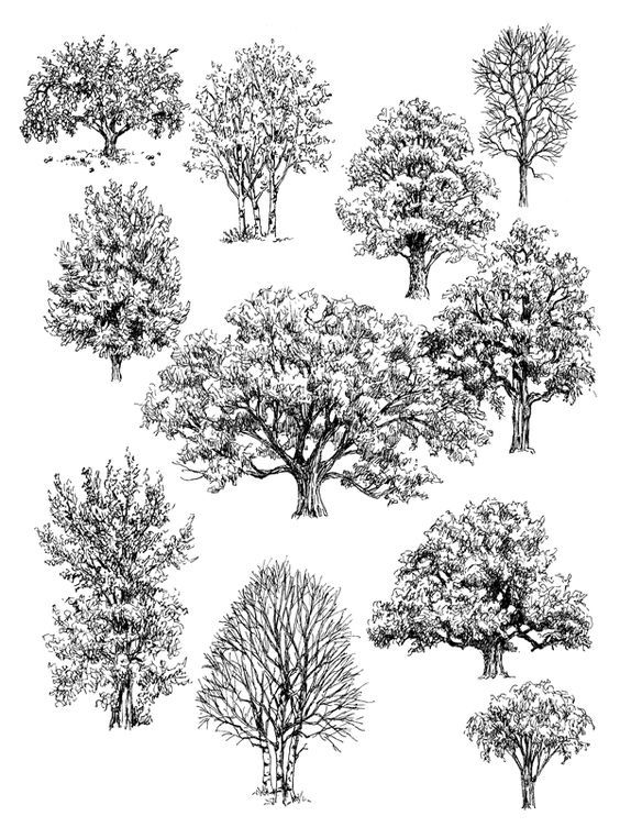 pen and ink drawings of trees...Claudia Nice: