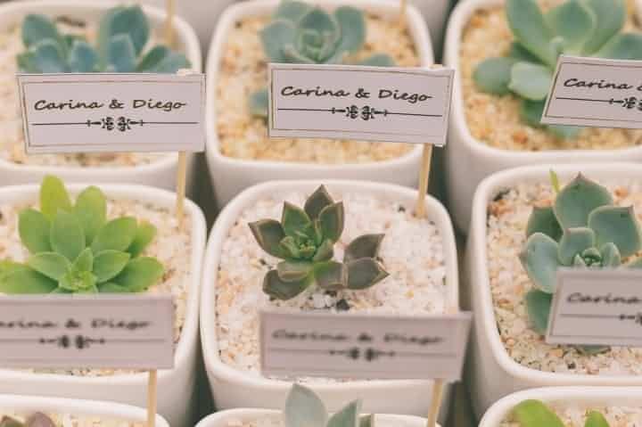Cactus como souvenirs para tu casamiento. Un detalle original, natural y diferente.