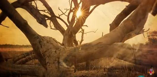 La gran sequía: la llegada de las lluvias. http://www.documentalesgratis.es/la-gran-sequia-la-llegada-las-lluvias/?utm_campaign=crowdfire&utm_content=crowdfire&utm_medium=social&utm_source=pinterest